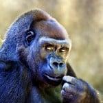 Zoo riddle scavenger hunt ideas